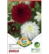 Dahlia - Duo Dark RED & White