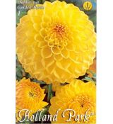 Dahlia Ball - Golden Torch