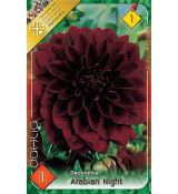 Dahlia Decorative - Arabien Night