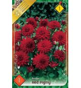 Dahlia Border - Red Pigmy
