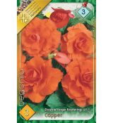 Begonia double large - Copper