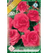 Begonia double large - Pink